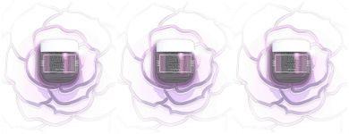 Имя розы: почему обязательно стоит попробовать новый крем Black Rose Sisley?