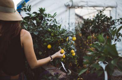 польза корицы с лимоном