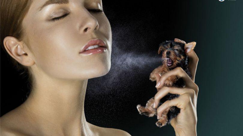 Косметика которая тестируется на животных: список этической косметики