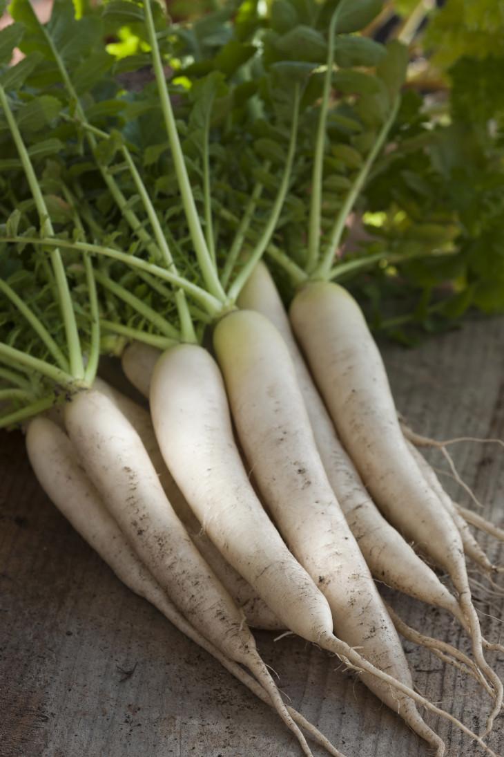 Популярный паназиатский овощ дайкон