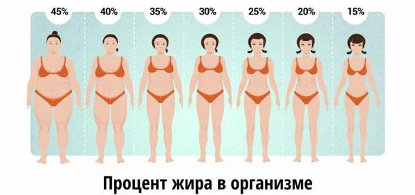 висцеральный жир