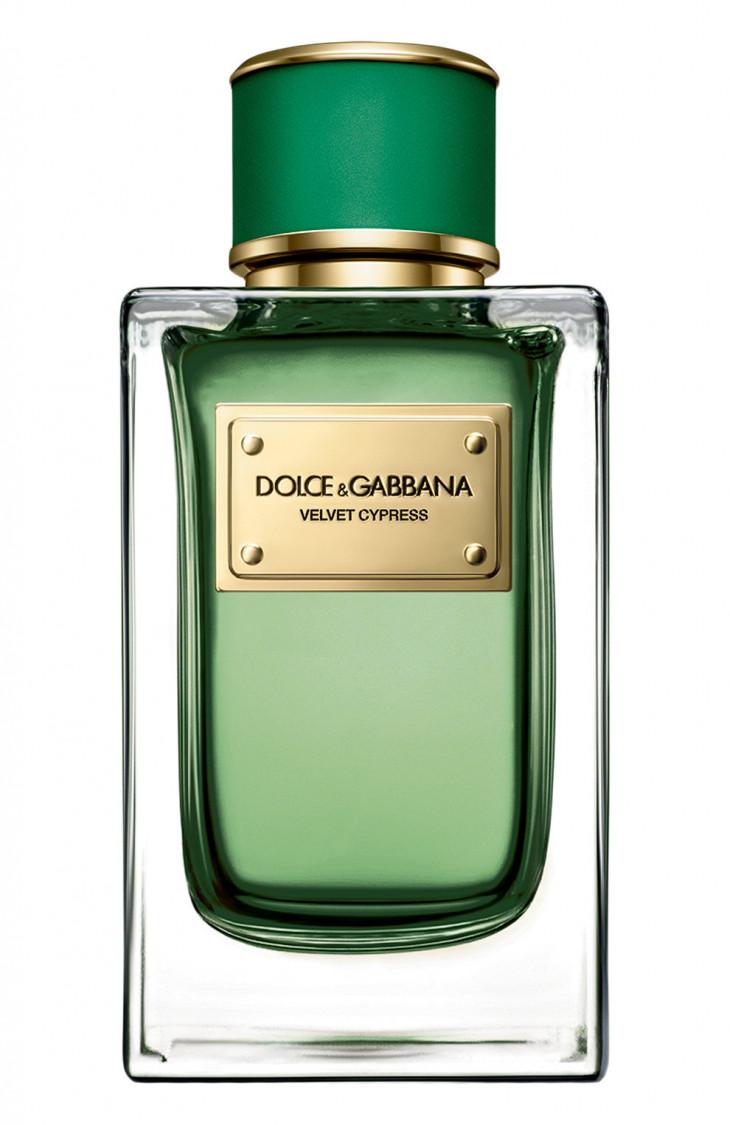 Dolce & Gabbana's Velvet Cypress
